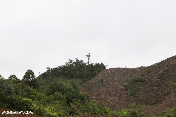 Slash and burn deforestation outside Tamatave