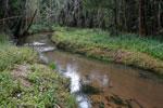 Forest killed by mine pollution [madagascar_0883]
