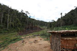 Small village near Mantadia; slash-and-burn (tavy) agriculture [madagascar_0973]