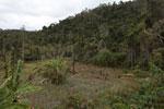 Forest clearing near Mantandia [madagascar_1026]