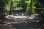 Ring-tailed lemurs in riverine gallery forest