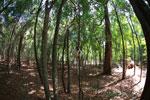 Sifaka forest [madagascar_2789]