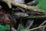 Frog [madagascar_3297]