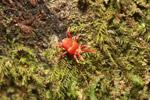 Pink and orange spider [madagascar_5450]