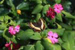 Butterfly [madagascar_5576]