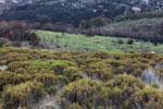Andringitra landscape [madagascar_6356]