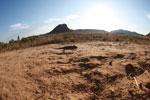 Oustalet's chameleon walking across sand near Isalo [madagascar_7342]