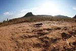 Oustalet's chameleon walking across sand near Isalo [madagascar_7343]