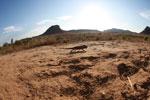 Oustalet's chameleon walking across sand near Isalo [madagascar_7345]