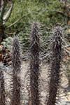 Spiny forest vegetation [madagascar_7589]