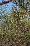 Spiny forest vegetation [madagascar_7614]