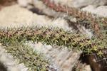 Spiny forest vegetation [madagascar_7617]