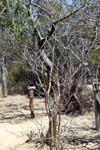 Spiny forest vegetation [madagascar_7641]