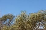 Spiny forest vegetation [madagascar_7645]