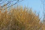 Spiny forest vegetation [madagascar_7686]