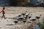 Vezo child herding geese