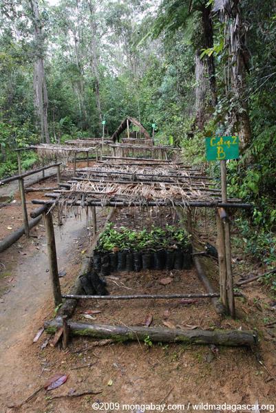 Mitsinjo reforestation nursery
