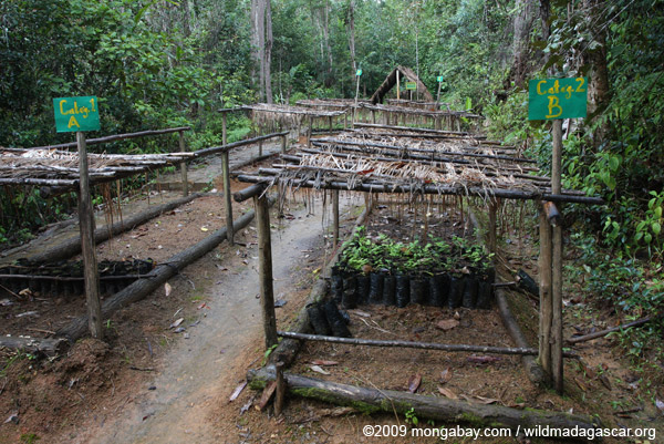 Mitsinjo reforestation nursery