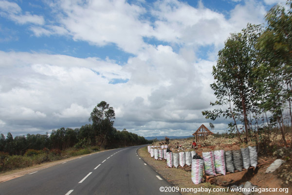 Bags of charcoal on sale along RN2 in Madagascar