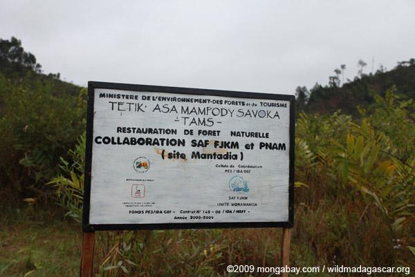 Reforestation project near Mantadia