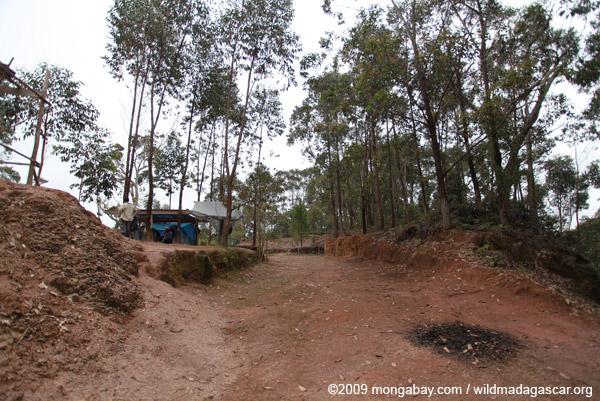 Mitsinjo field site