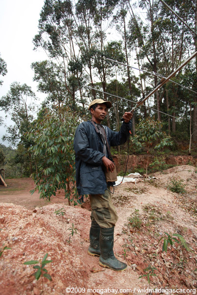 Radio tracking Proleur simus
