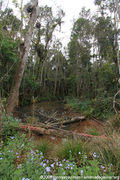 Forest killed by mine pollution