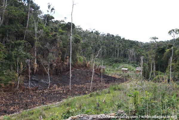 Tavy or slash-and-burn agriculture in Madagascar