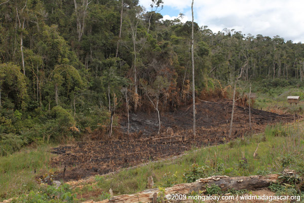 Tavy or slash-and-burn agriculture in Madagascar