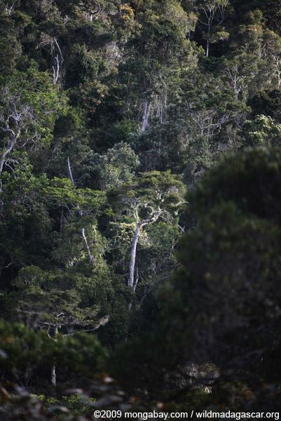 Mantadia rain forest