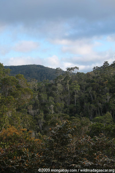 Tropical forest in Madagscar