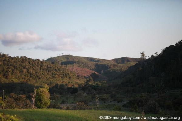 Hillside tavy in Madagascar