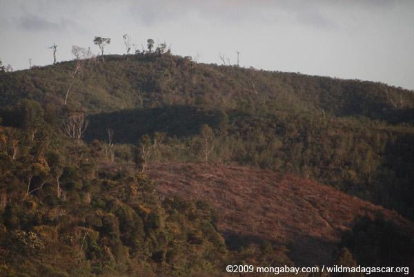 Tavy in Madagascar