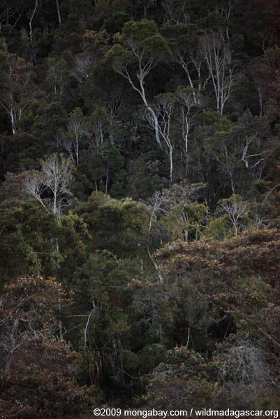 Highland rainforest in Madagascar