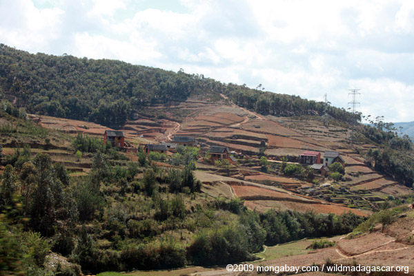 Village among rice fields and Eucalypt plantations