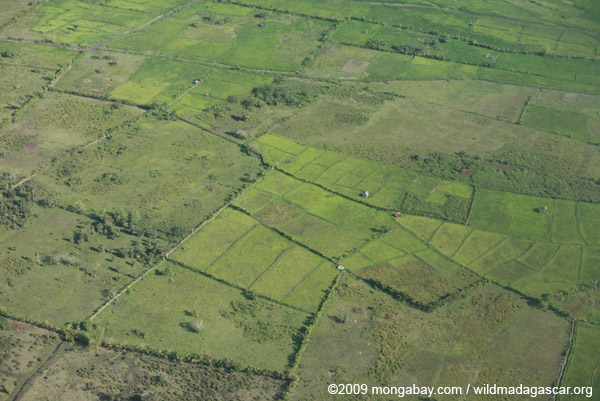 Aerial view of rice paddies near Maroantsetra