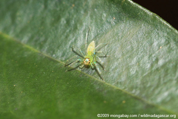 Translucent spider with turquoise, green, and yellow parts