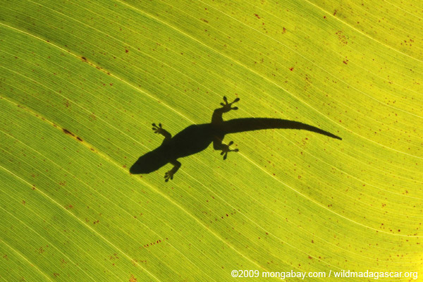 Shadow of a gecko on a sunlit leaf