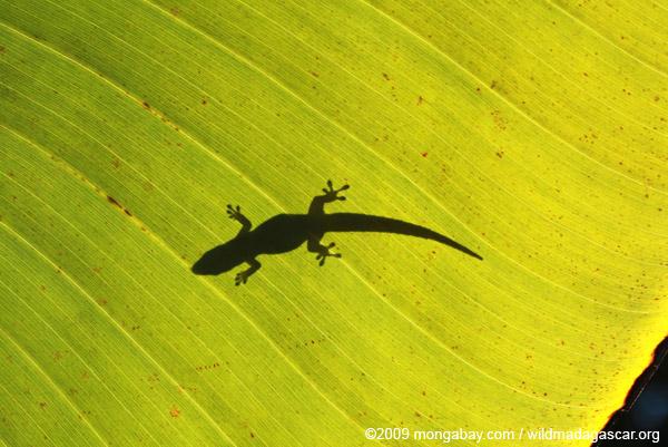 Shadow of a lizard on a sunlit leaf