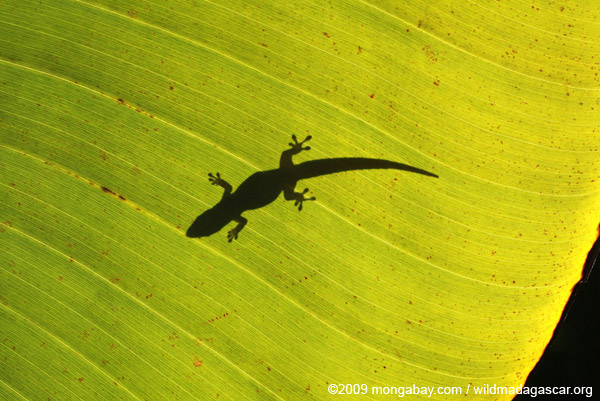 Shadow of a lizard on a sunlit leaf