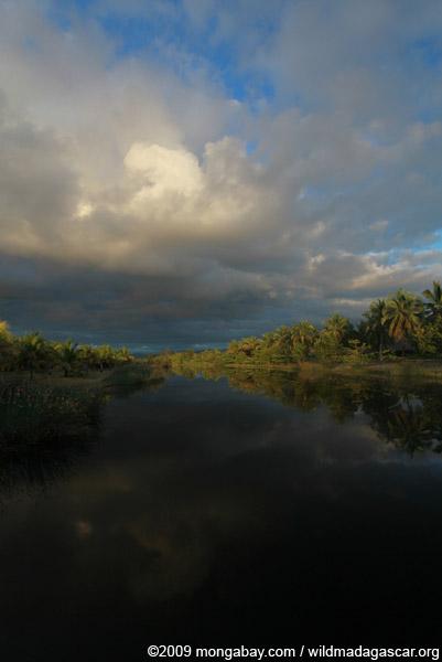 Palms along a canal near Maroantsetra