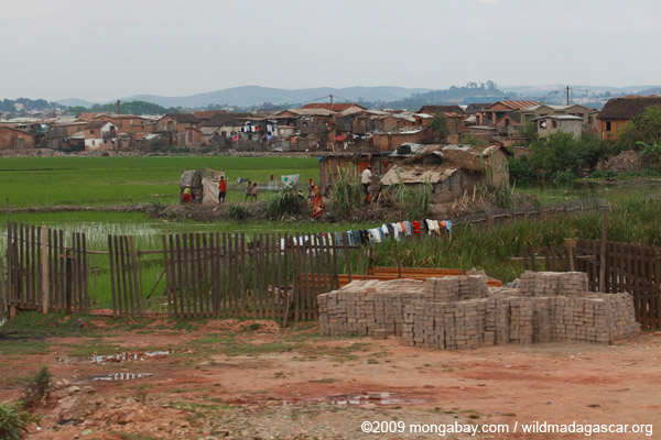 Rice fields in Tana