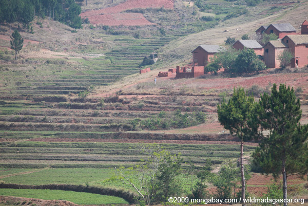 Rice fields and bricks houses of the Central Plateau in Madagascar