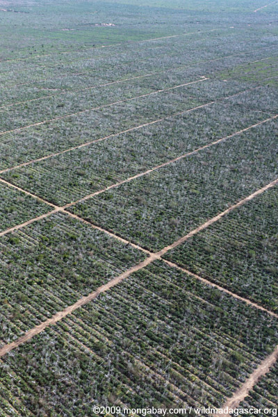 Aerial view of sisal plantation near Amboasary