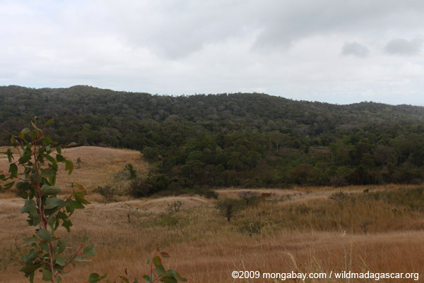 Grassland and tropical forest in Madagascar