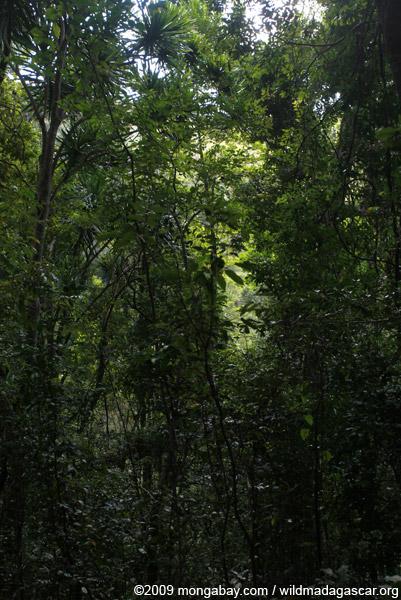 Montagne d'Ambre forest