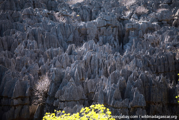 Limestone tsingy