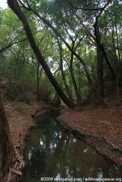 Creek in Ankarana