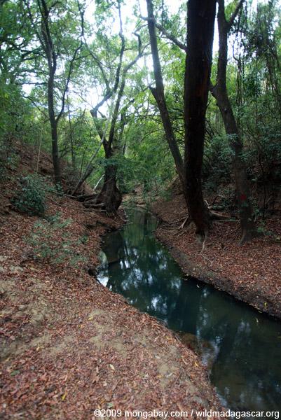 Creek in Ankarana