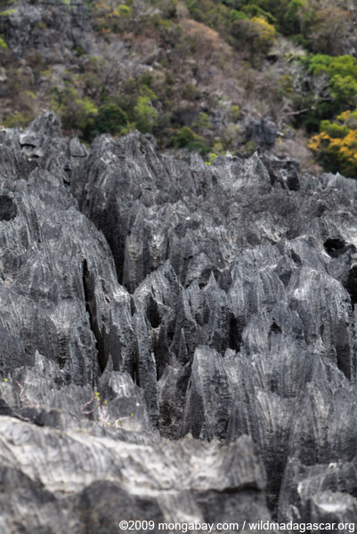 Sharp limestone tsingy